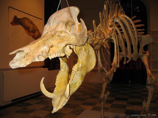 Los huesos de Lagarto